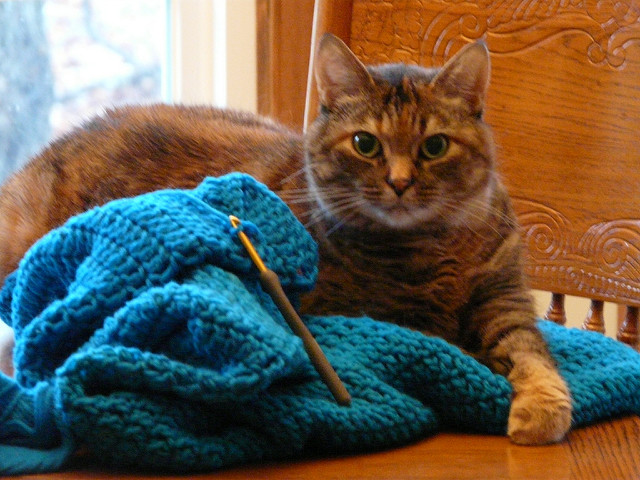 a cat crochets