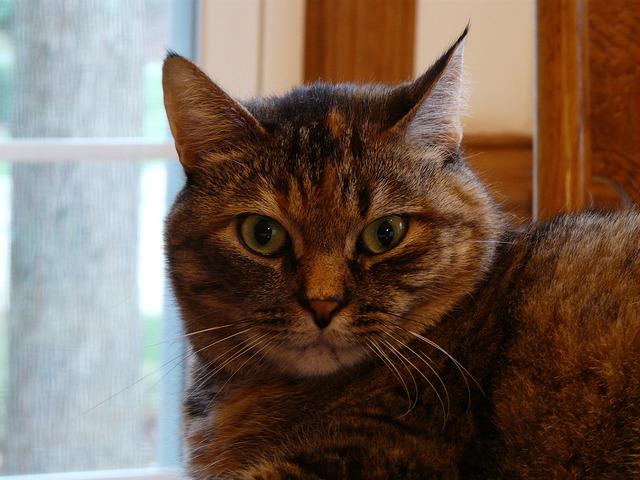 crochetbug, crochet, stripes, stripes the cat, cat