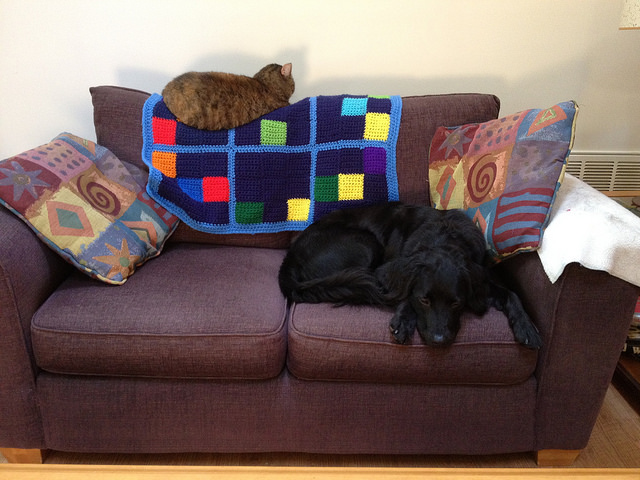 the pet sofa with dog and cat