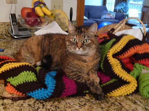 crochetbug, guard cat, crochet squares, granny square, crochet purse, crochet bag, crochet tote, granny square bag, granny square purse, granny square tote