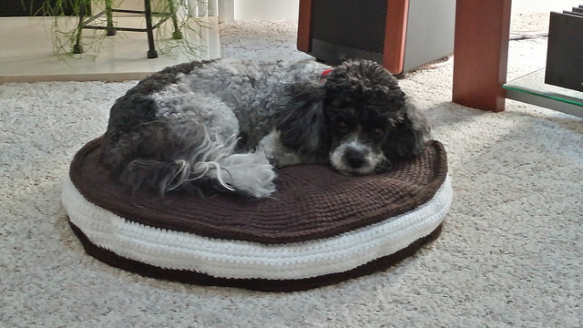 a dog named oreo on a replica oreo crochet pet bed