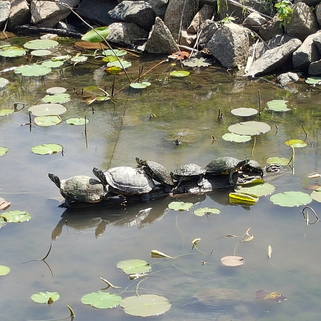 six turtles
