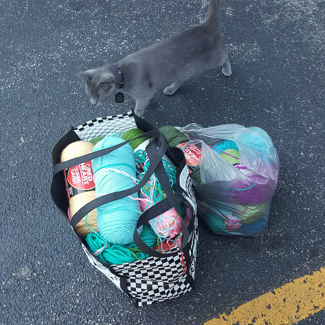 neighborhood cat inspects a yarn bag