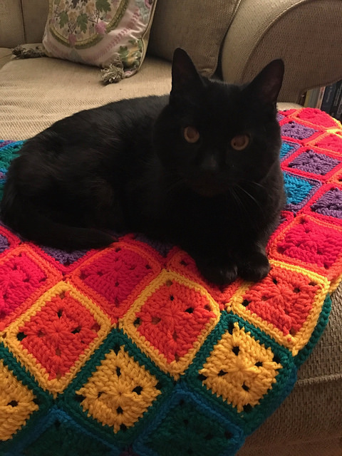 Mr. Bigglesworth and his crochet blanket