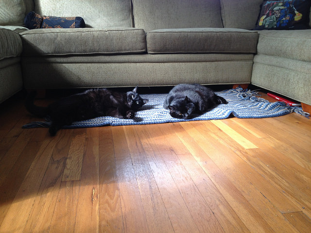 cats on a crochet rug