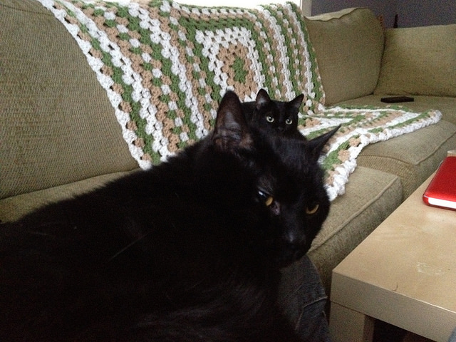 black cats on the sofa with a granny throw