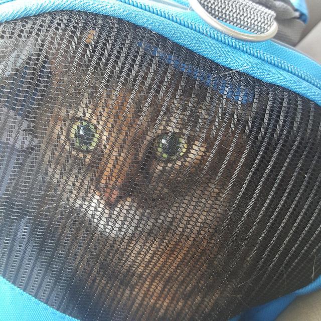 crochetbug, stripes, cat, stripes the cat