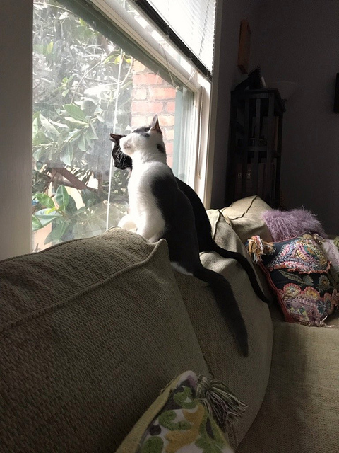 Marvin and Willie survey their new neighborhood